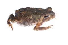 Animal toad frog Stock Photo