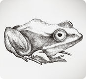 Animal toad, hand-drawing. Vector illustration..jpg Royalty Free Stock Photo