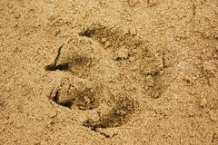 Animal trace Royalty Free Stock Photo