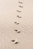 Animal traces in the sand - copy space Royalty Free Stock Photo