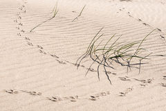Animal traces in the sand - copy space Royalty Free Stock Image