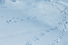 Animal traces on snow. Animal traces on fresh clean white snow Royalty Free Stock Photography