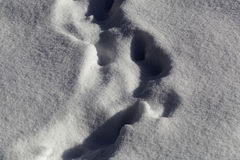 Animal traces in snow Royalty Free Stock Image