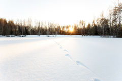Animal traces on the snowy surface of frozen lake Royalty Free Stock Photo