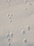 Animal tracks. In the snow Stock Photos