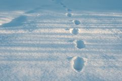Closeup of footprints in fresh snow in the frosty morning. Animal tracks in the deep snow on the field Royalty Free Stock Photos