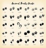 Animal tracks - foot print guide vector. Art royalty free illustration
