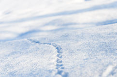 Animal tracks in the freshly fallen snow on New Year's Day. Animal tracks in the freshly fallen powder snow on New Year's Day Stock Photo