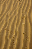 Animal Tracks in the Golden Desert Sands. Small insect and animal tracks cross the undulating  sand dunes in the Arabian Desert near Dubai Royalty Free Stock Photos