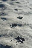 Bear tracks royalty free stock photography
