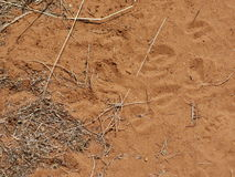 Animal tracks Royalty Free Stock Photography