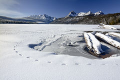 Animal tracks in nature winter lake Royalty Free Stock Image