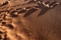 Animal tracks in the sand Royalty Free Stock Photography