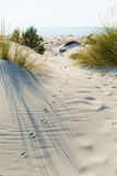 Animal tracks. In the sand in the dunes Royalty Free Stock Photography