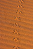 Animal tracks in the sand in the Namib desert Stock Photo