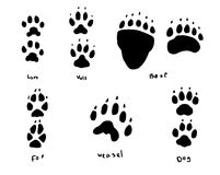 Animal tracks Royalty Free Stock Image