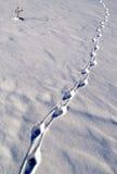 Animal tracks in snow Stock Image