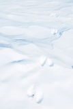 Animal Tracks in Snow. Closeup Animal Tracks in Snow Royalty Free Stock Images