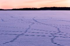 Animal tracks on snow. Animal tracks around the snow at a frozen lake in Finland Royalty Free Stock Photography