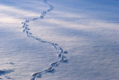Animal tracks in snow covered field Stock Photos