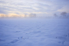 Animal tracks in the snow in a field in winter Royalty Free Stock Photos