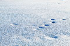 Animal tracks in the snow royalty free stock images