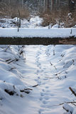 Animal tracks in the snow, going under the tree. Russia, near Moscow Royalty Free Stock Photo