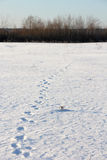 Animal tracks in the snow. Russia, near Moscow Stock Image