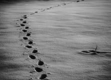 Animal tracks in the snow stock photos