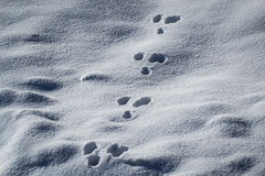 Animal tracks in the snow. Winter background animal tracks in the snow Stock Photography