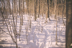 Animal tracks in the snow. In the winter forest Royalty Free Stock Photo