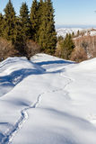 Animal tracks in a snowy forest. In the mountains of Kazakhstan Royalty Free Stock Images