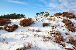 Animal tracks on snowy hill stock photos