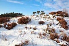 Animal tracks on snowy hill Stock Photos