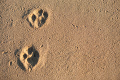 Animal tracks Stock Image