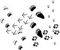 Animal tracks on white stock images