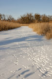 Animal tracks on winter river Stock Photo