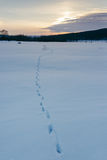 Animal tracks in the winter snow. Animal tracks in the snow on a winter setting sun Stock Photo