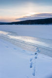 Animal tracks in the winter snow. Animal tracks in the snow on a winter setting sun Royalty Free Stock Image