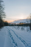 Animal tracks in the winter snow. Animal tracks in the snow on a winter setting sun Stock Images