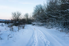 Animal tracks in the winter snow. Animal tracks in the snow on a winter setting sun Royalty Free Stock Images