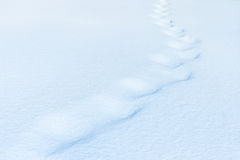 Animal trail in snow  after blizzard Stock Photography