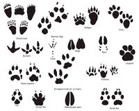 Animal trails with title. Biggest collection of animal and bird trails with title Stock Images