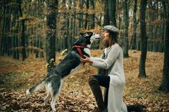 Animal training. Girl pretty stylish woman walking with husky dog autumn forest. Pedigree dog concept. Best friends stock images