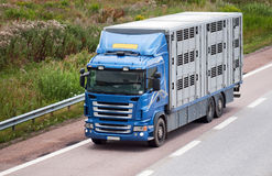 Animal transport. Animal transport leaving the highway Stock Photo