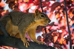 Animal On Tree Branch stock image