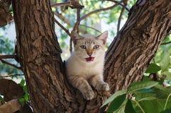 Animal on a tree! Royalty Free Stock Image