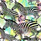 Animal tropical de la cebra de la composición en la selva en fondo dibujado mano colorida de la pintura Fotos de archivo libres de regalías