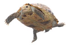 Animal turtle tortoise Royalty Free Stock Photos
