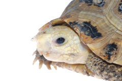 Animal turtle tortoise Stock Photo
